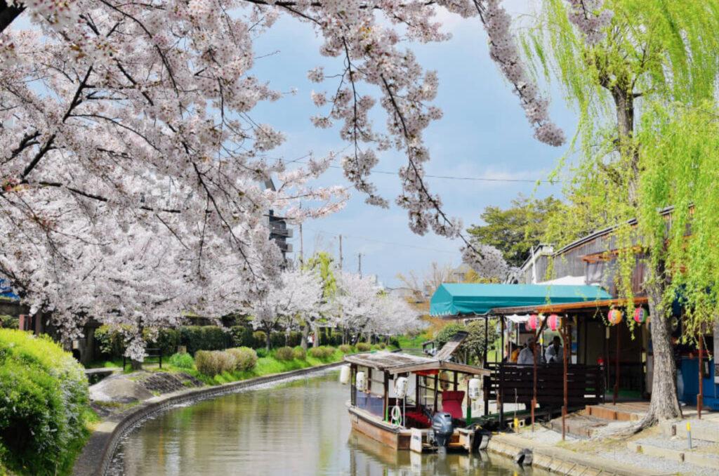 fushimi sakura